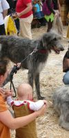 Ritterfest Kapfenberg - Bryce & Clive (Deerhound)